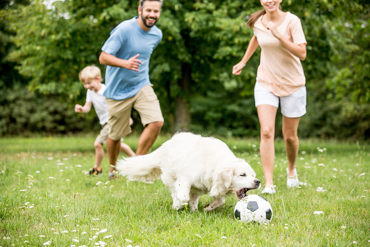 Familie mit Hund beim Fussball