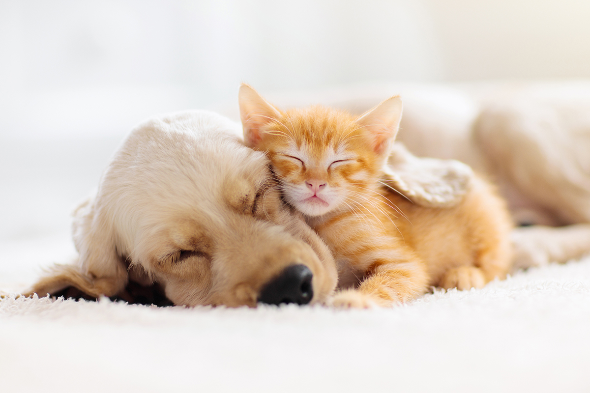 Hunde- und Katzenbaby